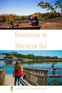 In Northern New Jersey, you might not think to bird watch. However, bird watching is a wonderful activity. If you are looking for a new activity, consider bird watching, Here is a review of some locations to help guide you. Along with some honorable mentions.