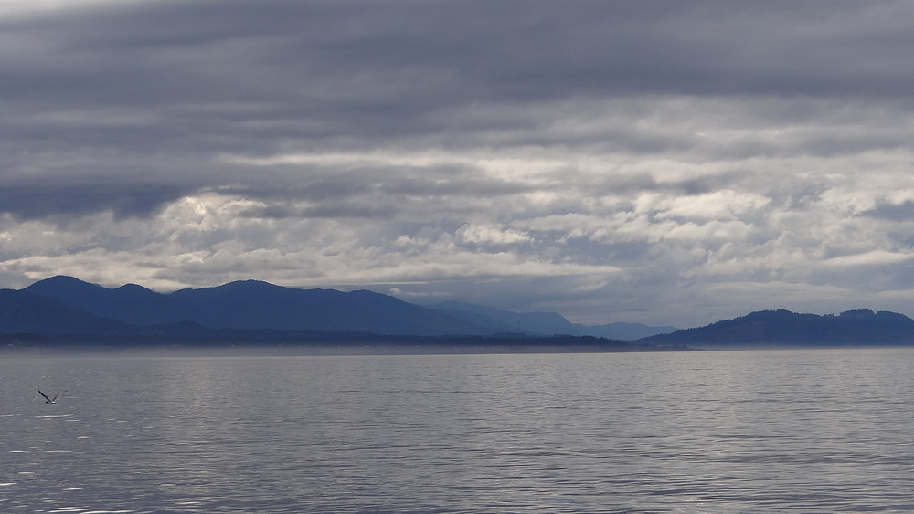 Via of Olympic National Park from Black Ball Ferry in Pugnant Sound to port at Port Angelas.