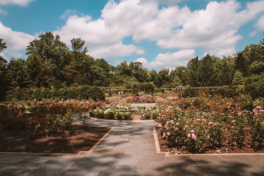 There are many free gardens throughout New Jersey to explore. Check out these seven gardens.