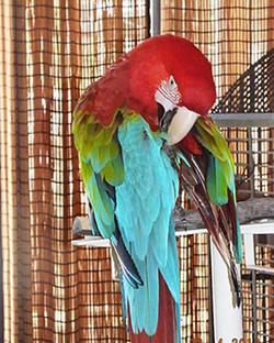 Bird rescue, USA