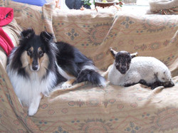'Lassie' & 'Lucy'