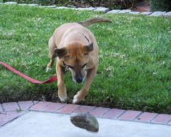My Best Pal - Rocky!