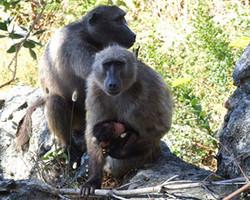 Baboon Matters Trust