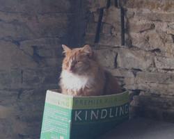 'Puss-in-box'