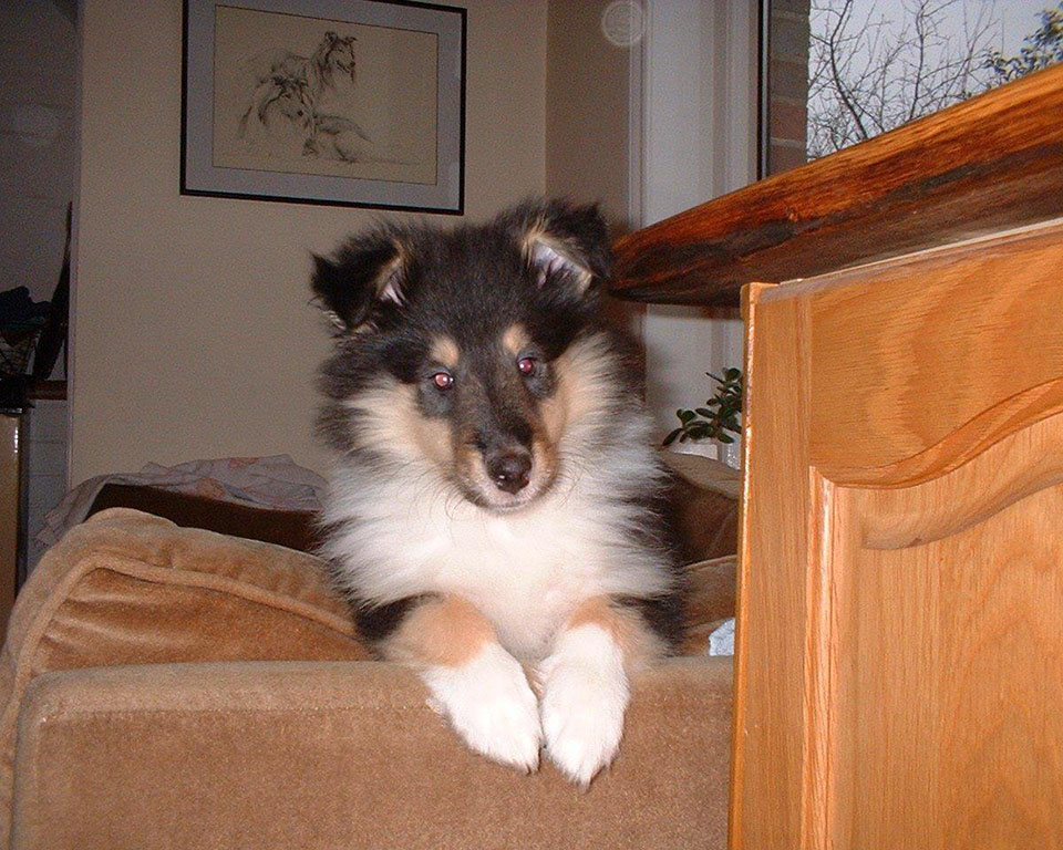 Peek-a-boo puppy