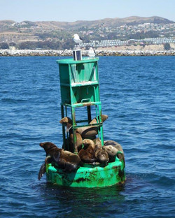 Relaxed Seals