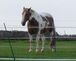 A Mustang