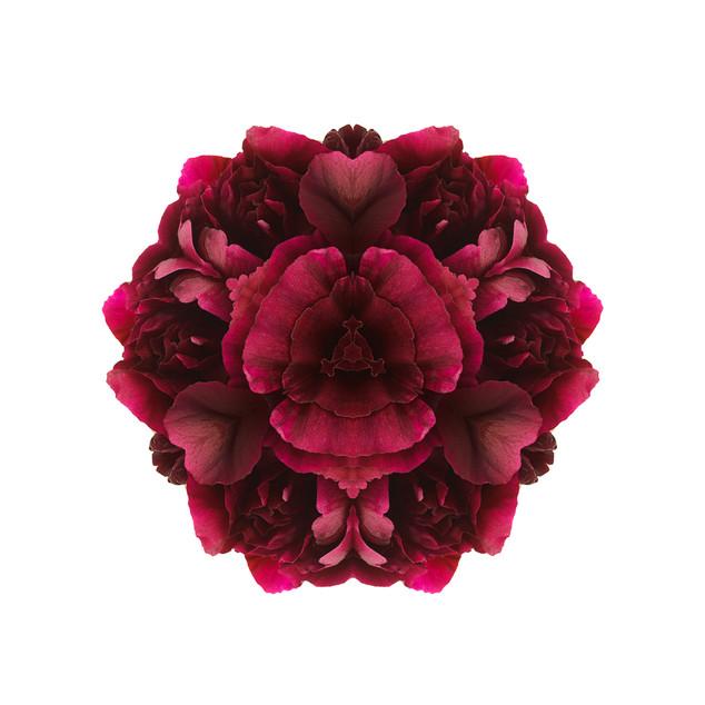 S_Florascope red.jpg