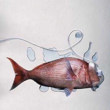 S_fish.jpg