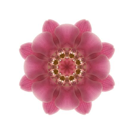 S_Florascope pink eye.jpg