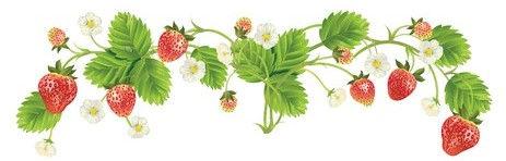 strawberry border.jpg