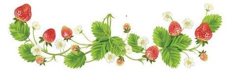 strawberry border 2.jpg