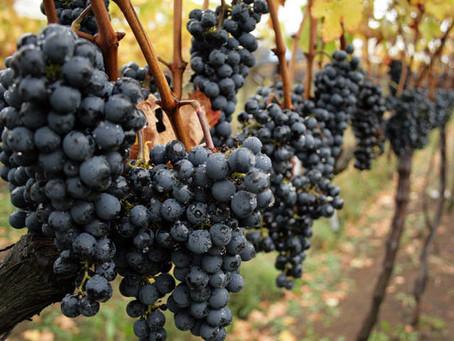 Aprenda a escolher o vinho de acordo com a uva