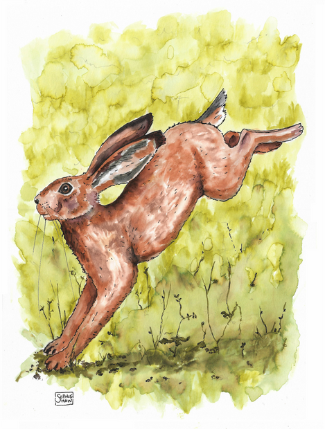 Hare leaping edited.png