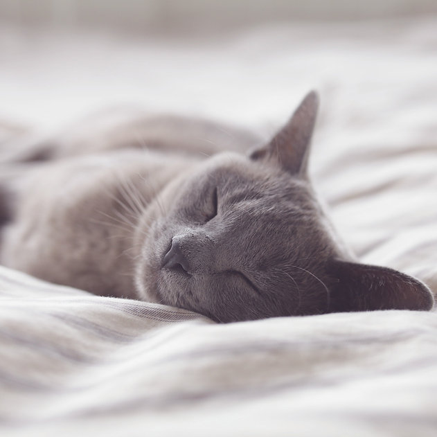 a grey cat sleeping on a white bed