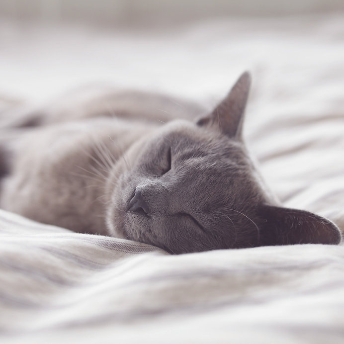 a happy grey cat sleeping on a white bed