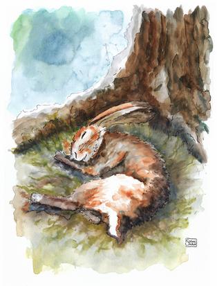 Hare Drifted Easily To Sleep