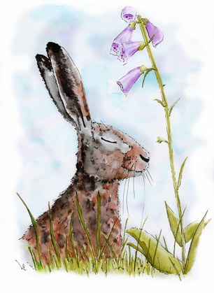 Hare Sat Down Under a Foxglove