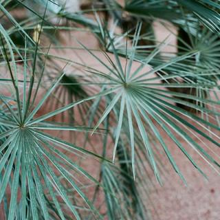 Palm- Jardin Majorelle- Marrakech