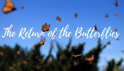 The Return of the Butterflies (2).png