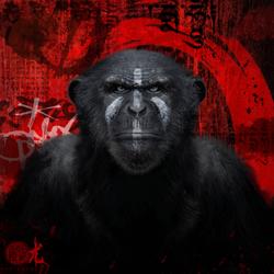 Cesar monkey 80x80 cm