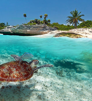 fauna-caribe.jpg
