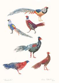 Pheasants-talentino