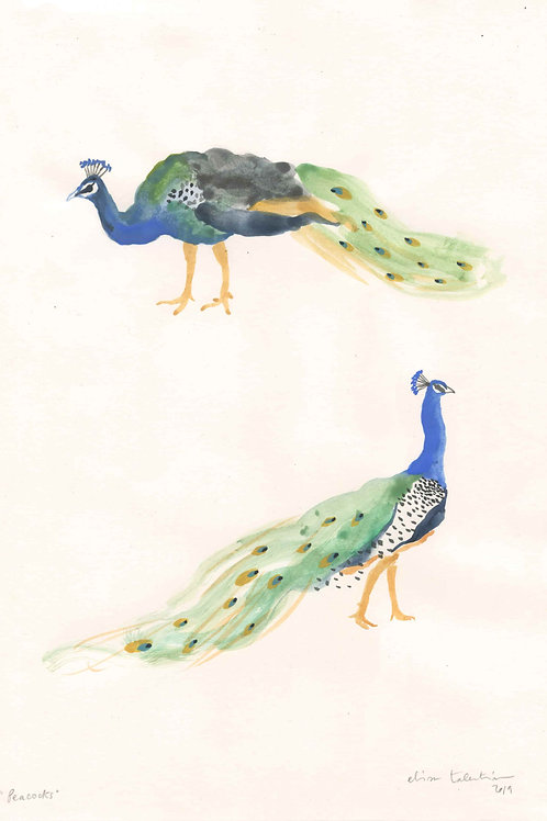 Peacocks3