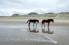 horses on beach retreat.jpg