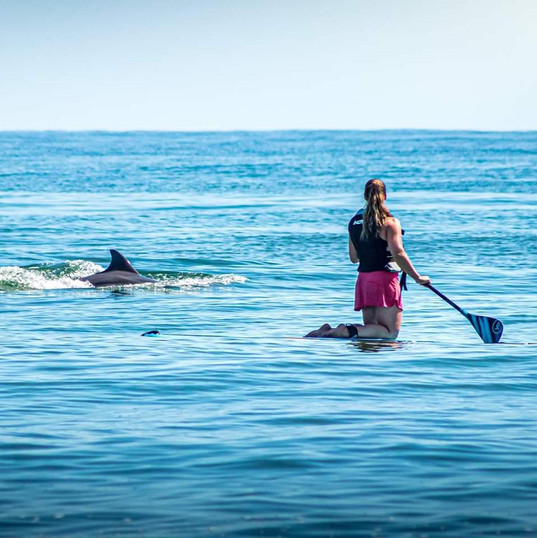 Paddle with dolphins
