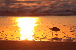 obx sunset.jpg