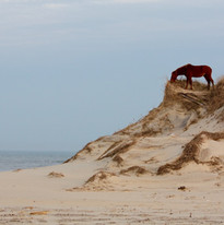 Share the beach with wild horses