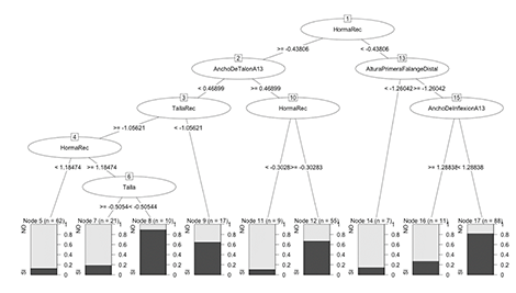 Decision Tree algorithm to predict footwear sizing
