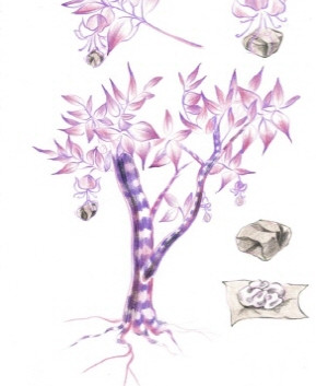 김영래, <자색호두나무>, drawing