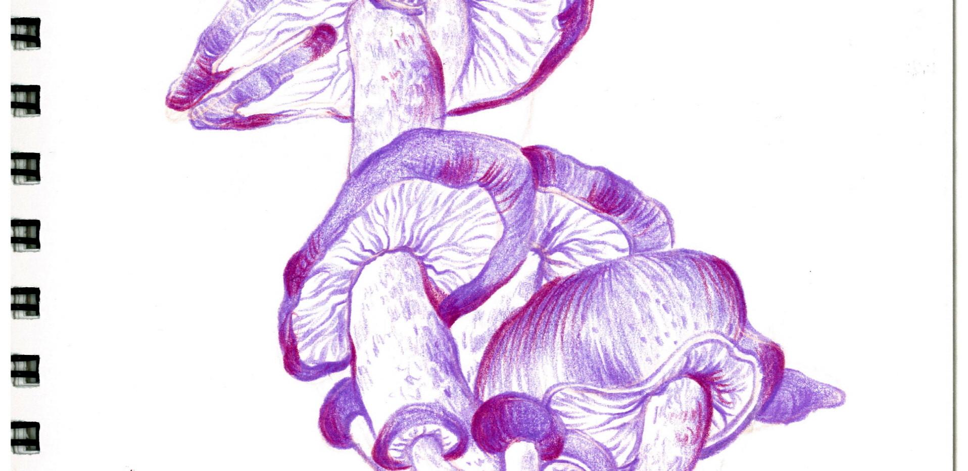 김영래, <보라버섯가오리>, drawing
