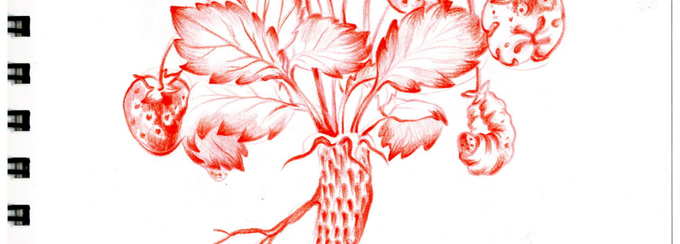 김영래, <물고기뿌리딸기애벌레>, drawing