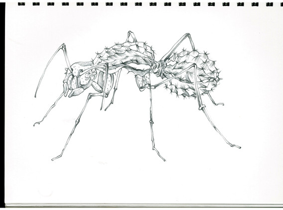 김영래, <사막개미선인장>, drawing