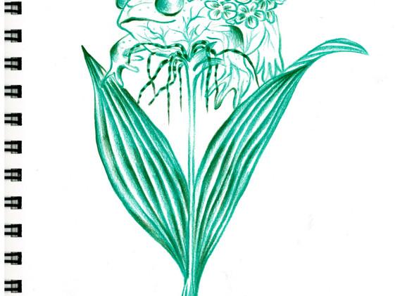 김영래, <복숭아개구리꽃>, drawing