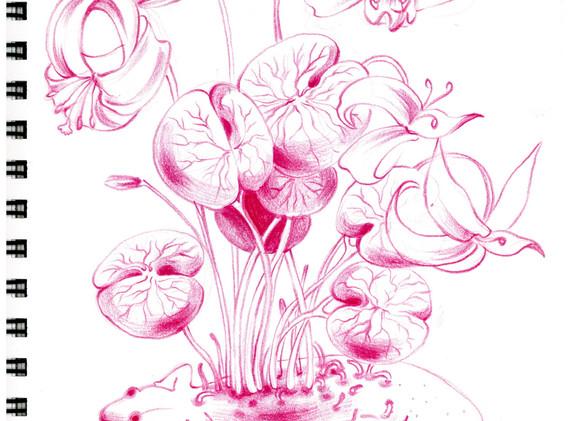 김영래, <도룡뇽뿌리꽃>, drawing