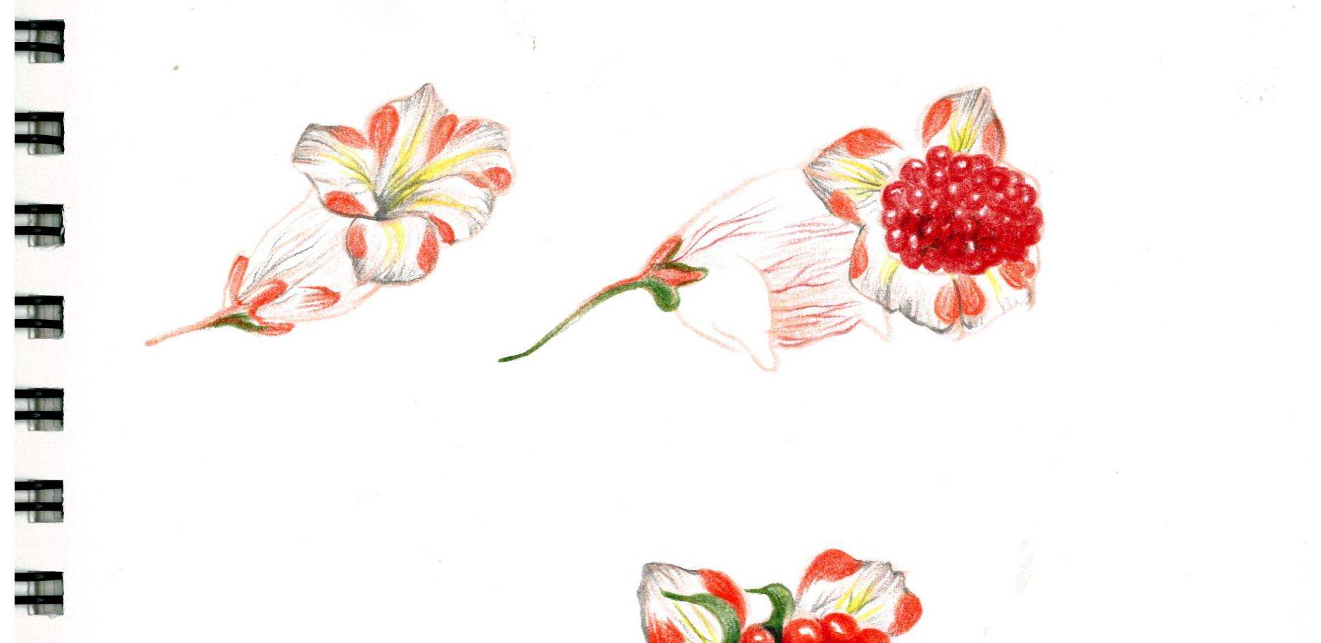 김영래, <하트마우스베리꽃>, drawing