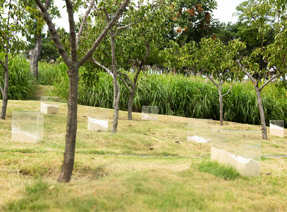 박민우, 관조의 정원, mixed media, installation, 2020
