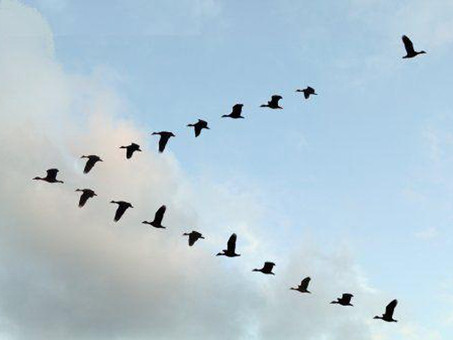 THE MIGRATORY BIRD TREATY AND THORNTON W. BURGESS