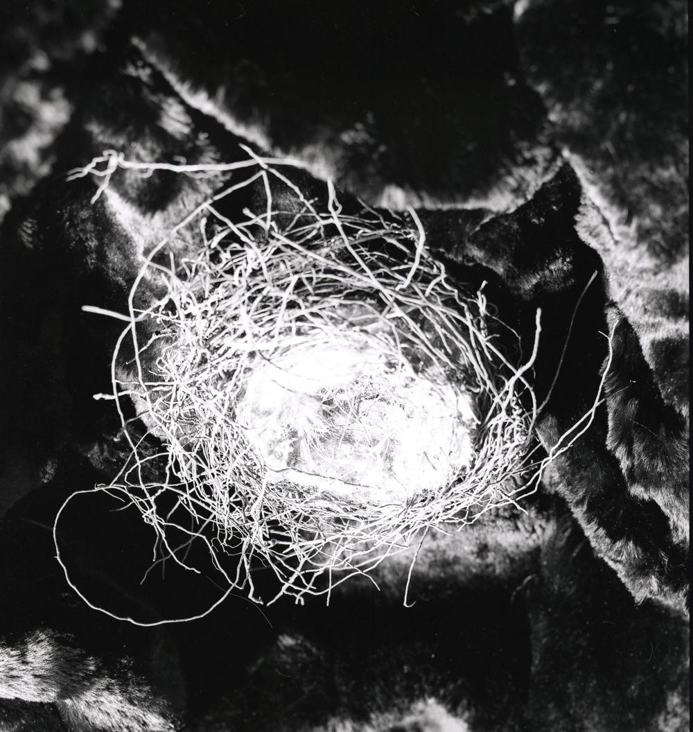 Músico experimental Cannis Latrans