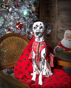 FFF Christmas_Nov072018_9151.jpg