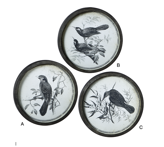 Round Bird Pen & Ink Wall Art with Glass
