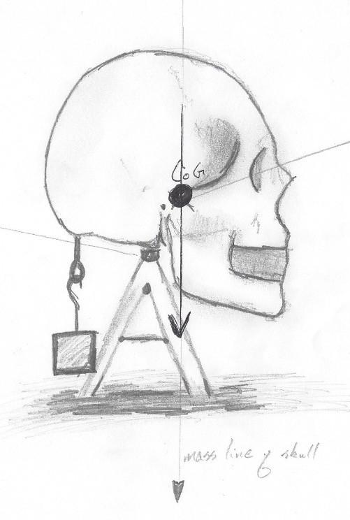 The Forward Balance of the Skull