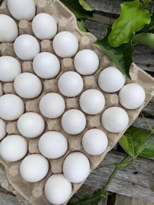 珍珠蛋 White Pearl Egg