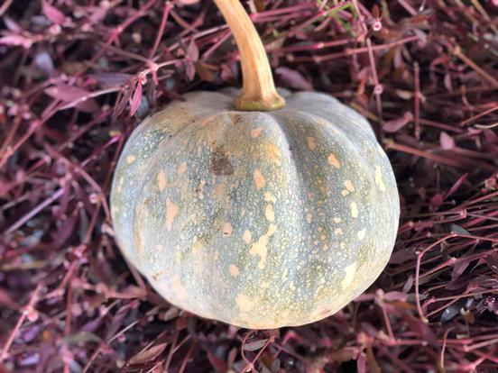 南瓜块 Pumpkin