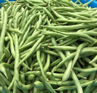 富贵豆 French Beans