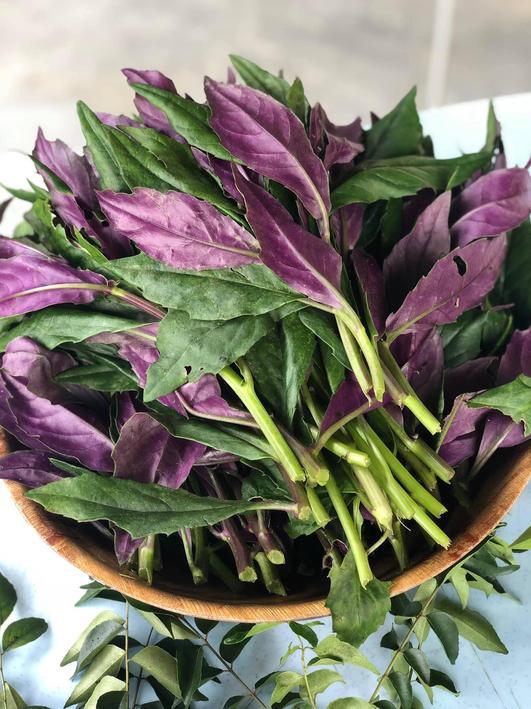 凤尾菜 Purple Veggie